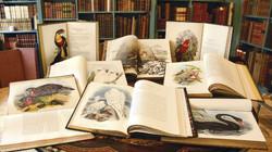 Shapero Rare Books