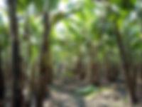 Pagador Farm OHN Spraying (3).jpg