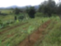 Libona farm.jpg