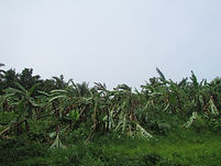 MK Dairy Farm hit by tornado (5).JPG