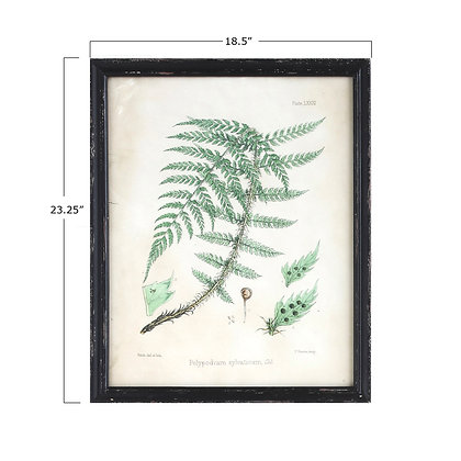 Fern Reproduction Images in Wood Frame (6 styles) DA6899A