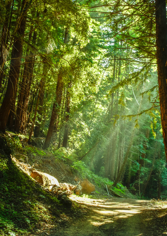 I took a walk in the woods, and came out taller than the trees. ~ Henry D. Thoreau