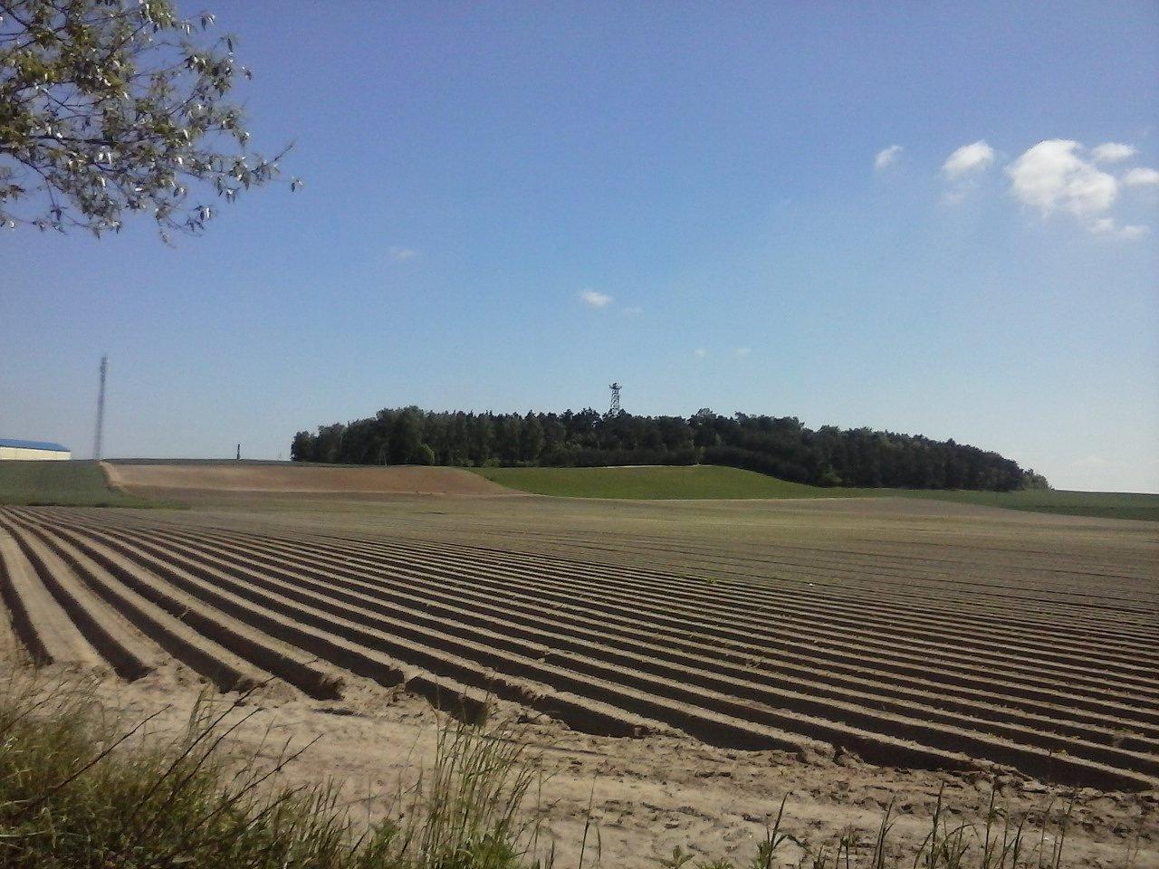 Suchatówka-_piaszczyste_gleby