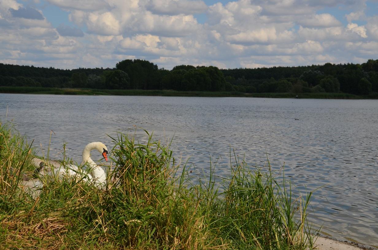 Suchatówka-_Nad_jeziorem