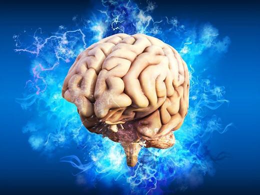 Di cosa si nutre il nostro cervello?