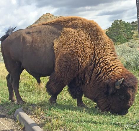 27-bison icloud 15mar18 adobe 11dec18.jp