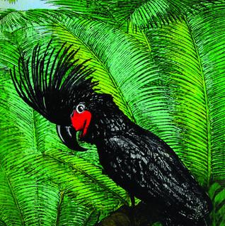 Palm Cockatoo copy.jpg