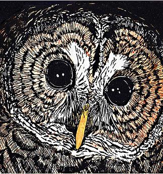 New Barred owl copy.jpg