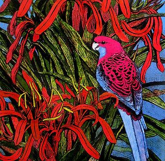 Crimson Rosella copy.jpg