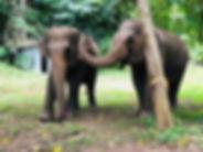 BEES Elephant_190807_0005.jpg