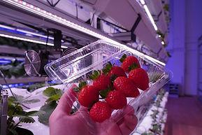 strawberry.jfif