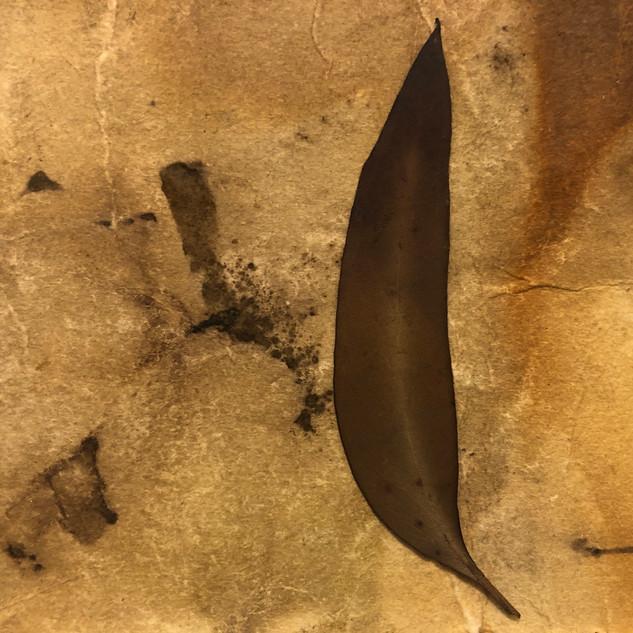 Gabrielle Mordy, 4th January, 2020 Morton National Park 14. Plant dyed hahnemühle paper, burnt leaf & metallic thread. 13 x 18cm