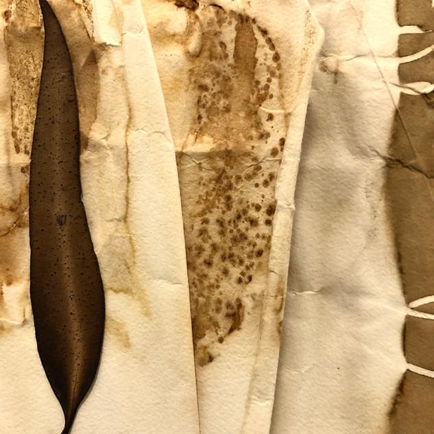 Gabrielle Mordy. 4th January, 2020 Morton National Park 15.  Arches plant dyed paper & burnt leaf . 14 x 19cm