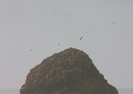 lighthousegulls.jpg