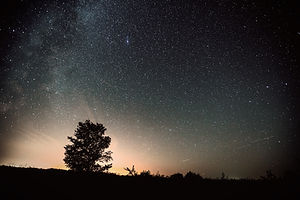 Starry sky and summer meadow with tree_edited.jpg