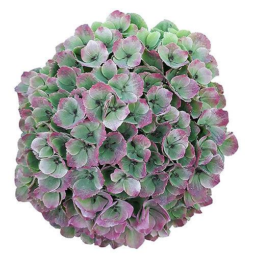 Hydrangea - Special