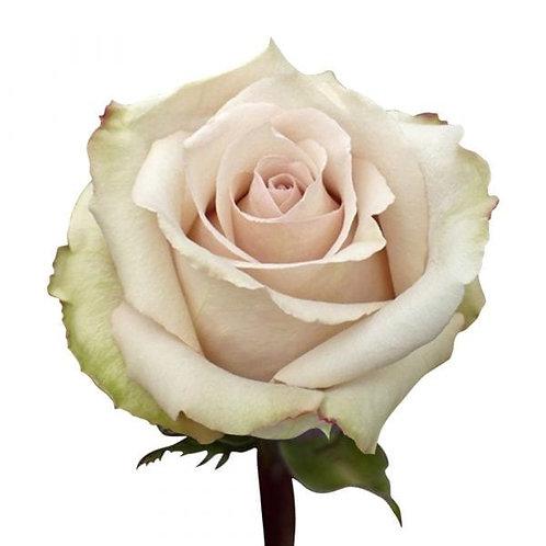 Quicksand Roses (25 Stems)