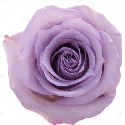 Lavender Roses (25 Stems)