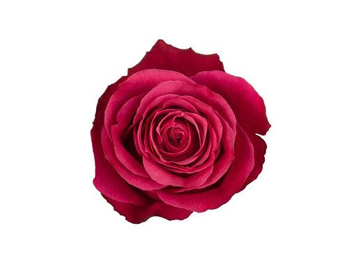 Cherry-O Rose
