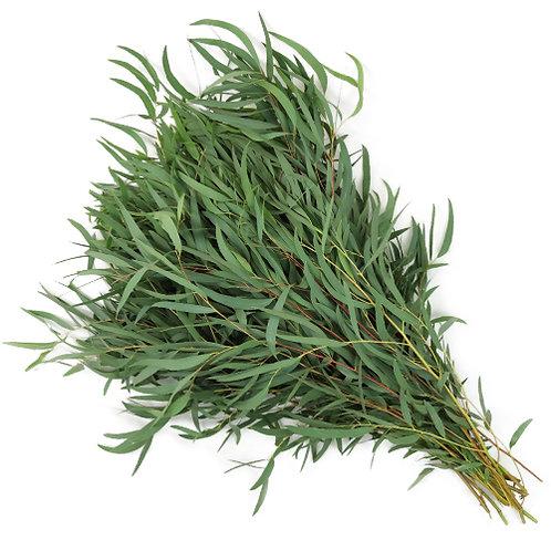 Willow Eucalyptus Greenery
