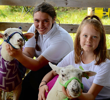 Listowel Fair 2018 - sheep show.jpg