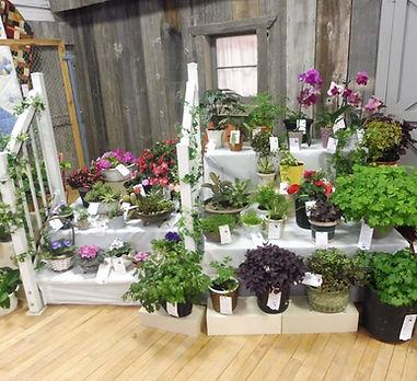 Plants & Cut Flowers display.jpg