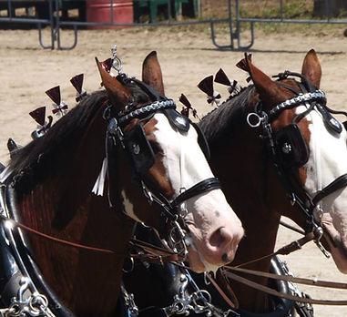 Heavy Horses.jpg
