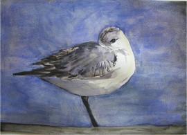 Bird looking back, 2012