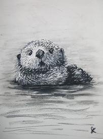 otter 1a.jpg