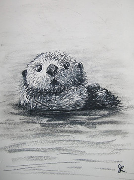 sea otter, 2015