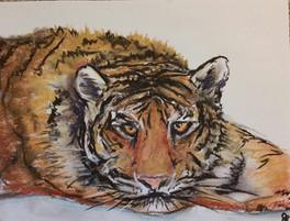 Tiger, 2015