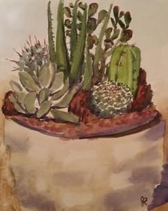 Desert in a pot, 2016