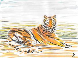 Tiger plaid, 2016