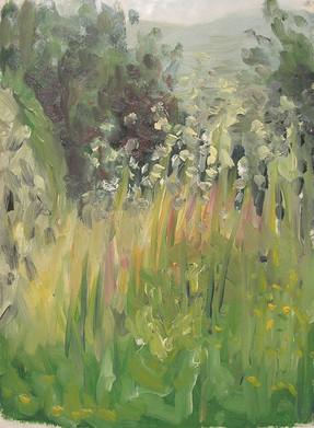Wheatgrass, 2005