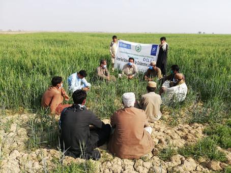 فوڈ سیکورٹی :جھل مگسی سمیت پورے بلوچستان کا مسئلہ   تحریر:محمود احمد ترین