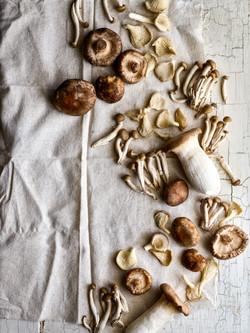 Mushrooms copy