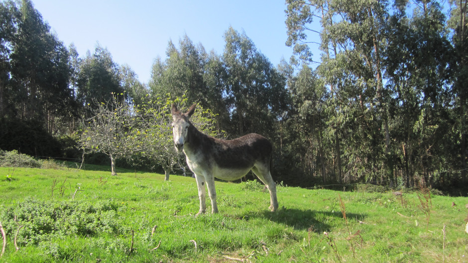 Our donkey!