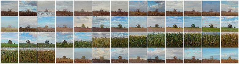 Ian MacGillivray painting A field of Maize