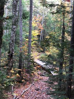 Sawyer Pond Trail, NH