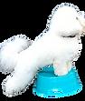 Dino Pic Logo.png