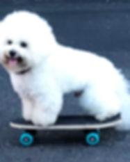 dino skateboard.jpg