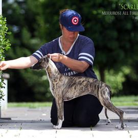 Puppy Scarlett