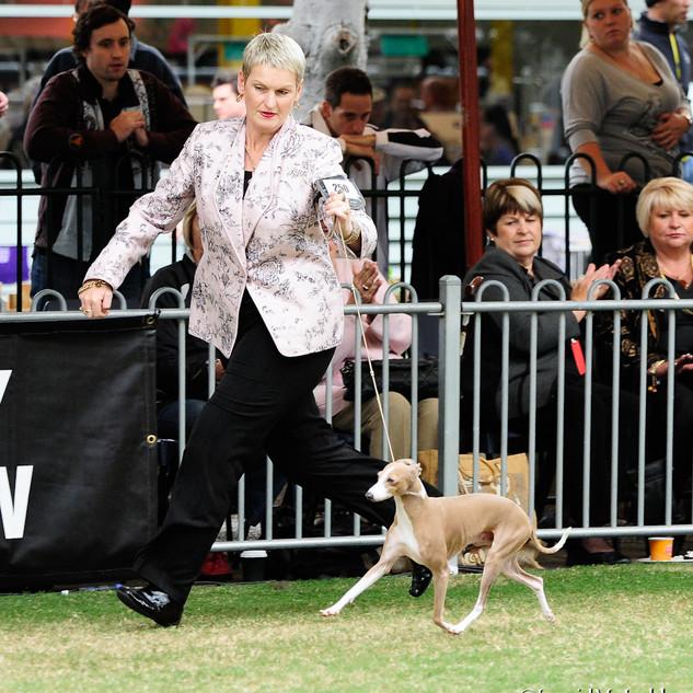 Nova Sydney Royal 2011 Movement.jpg