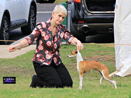 Dogs On Show