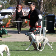 Posh-trot-hound.jpg