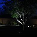 Dallas Landscape Lighting Tree Lighting