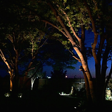 Dallas Landscape Lighting Tree Lighting