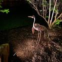 NightSculptures Outdoor Lighting Dallas