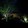 Dallas Landscape and Tree Lighting by Ni