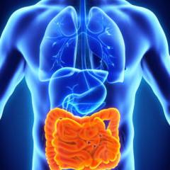 Le « gut training » ou comment réduire les troubles digestifs à l'effort ?